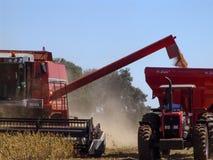 Récolte de soja photographie stock libre de droits