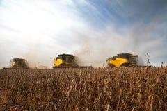 Récolte de soja Photo libre de droits