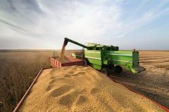 Récolte de soja en automne image libre de droits