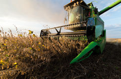 Récolte de soja en automne photo stock