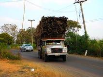 Récolte de sucre Photo stock