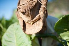 Récolte de Tabacco Photos stock