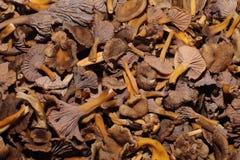 Récolte de Yellowfoot Images stock