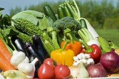 Récolte des légumes Photographie stock