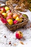Récolte des pommes rouges dans un panier et dans des feuilles d'automne photos stock