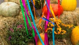 Récolte des potirons, de la courge, des courges et des chrysanthèmes disposés Image stock