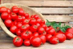 Récolte des tomates fraîche dans une cuvette en bois Images stock