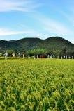 Récolte du riz et des épouvantails, automne au Japon Images libres de droits