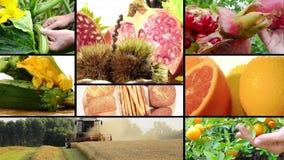 Récolte et produits agricoles banque de vidéos
