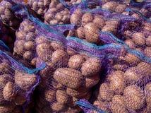 Récolte fraîche de pomme de terre emballée dans les grilles photos libres de droits