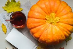 Récolte fraîche de potiron orange Photographie stock