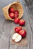Récolte fraîche des pommes Images stock