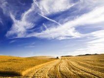 Récolte mécanisée une zone de blé Image stock