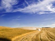 Récolte mécanisée une zone de blé Photos libres de droits