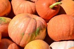 Récolte, orange de potiron Image libre de droits
