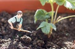 Récoltes de jeune exploitant agricole image libre de droits