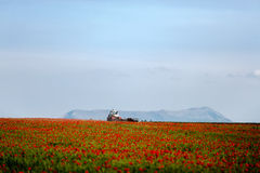 Récoltes de tracteur Photographie stock