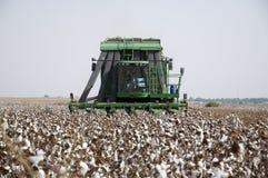 Récolteuse de coton Photos libres de droits