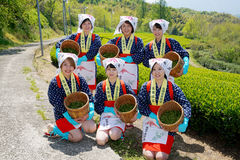Récolteuse de thé de jeunes filles japonaises Images stock