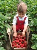 Récolteuse fière de fraise Photos stock