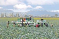 Récolteuses de ferme dans le Canada occidental photographie stock libre de droits
