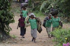 Récolteuses sri-lankaises de thé photo libre de droits