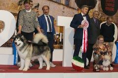 Récompense du chien international 2017 d'expo dans l'ombre de Bastia, Pérouse Images stock
