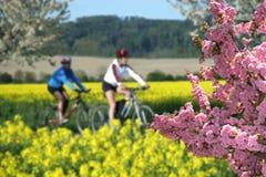 Récréation sur des vélos image stock