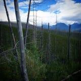 Récupération de forêts au Montana Photo libre de droits