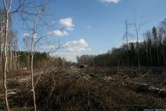 Réduisez les arbres dans la forêt de Khimki Image stock