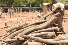 Réduisez les arbres - effets des forêts de destruction, réchauffement global, photo libre de droits