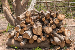 Réduisez les arbres - effets des forêts de destruction, réchauffement global, image stock