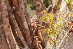 Réduisez les arbres - effets des forêts de destruction, réchauffement global, image libre de droits