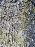 Référence moussue d'écorce d'arbre Image libre de droits