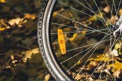 Réflecteurs oranges sur des rais de jour d'automne de bicyclette photos stock