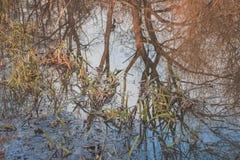 Réflexion à l'envers d'arbre Image libre de droits