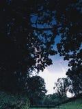 réflexion Image stock