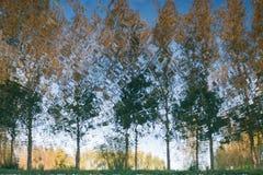 Réflexion abstraite de feuillage d'automne photographie stock