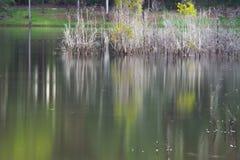 Réflexion artistique des arbres de la mort sur l'eau Photos libres de droits