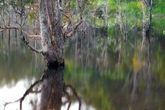 Réflexion artistique des arbres de la mort sur l'eau Image libre de droits