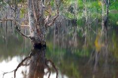 Réflexion artistique des arbres de la mort sur l'eau Photo libre de droits