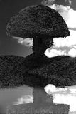 Réflexion blanche d'arbre de maison de noir rond d'arbre dans l'eau Image stock