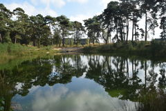 Réflexion calmée d'étang sur une bruyère néerlandaise Photos stock