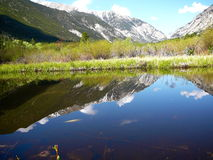 Réflexion calme Image stock