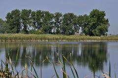 Réflexion d'étang Photographie stock