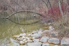 Réflexion d'étang de parc de lions - Janesville, WI Image libre de droits