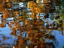 RÉFLEXION D'ARBRE Photo libre de droits