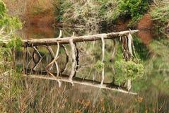 Réflexion d'arbre Image stock