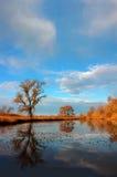 Réflexion d'arbre de chêne Photos libres de droits