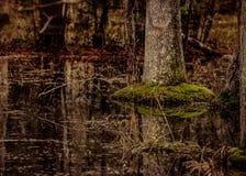 R?flexion d'arbre de l'eau de marais photographie stock